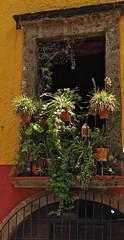 A crowded balcony : San Miguel de Allende (rainy city) Tags: plants balcony sanmigueldeallende mexico