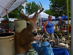 Browsing (BadBlackdog9) Tags: mesopotamia oxroast ohio amishcountry amish mennonite streetphotography peoplewatching taxidermy deer deerhead fleamarket