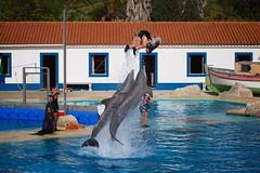 Apresentação de Golfinhos e Leões-marinhos (Carlos Santos - Alapraia) Tags: zoodelisboa golfinho dauphin água show