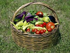 My garden* (AlexGinger) Tags: garden vegetables legumes nature natura nikon summer greece