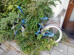Overgrown Biky (Quetzalcoatl002) Tags: bike childrensbike fietsje kinderfiets overgrowth vegetation streetshots street amsterdam blue