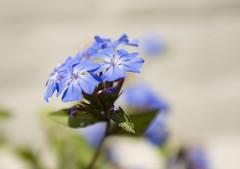 Flowers. (ost_jean) Tags: nikon d5200 tamron sp af 1750mm f28 xr di ii vc ld aspherical if b005n ostjean ngc