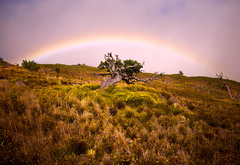 Old Wise Tree (George Leonov) Tags: landscape hawaii clouds sky mountain nature bigisland scape scenery warmlight outside traveldestination goldenglow scenic vibrant tranquil serene goldenlight rainbow tree treeoflife outdoor usa