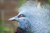 Zoo Dortmund 12 (akumaohz) Tags: deutschland germany zoo tierpark nikon d3200 drausen outdoor tiefenschärfe schärfentiefe tier tiere animal animals vogel vögel bird birds blau blue rot red struktur schwarz black dortmund
