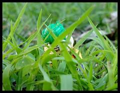 """Don't go to into the long grass!"" (Korpsical666) Tags: joker sabretooth hyena dc comic villain lego minifigure"