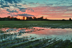 puddles everywhere (Christian Collins) Tags: canoneos5dmarkiv midland midlandcounty michigan mi flood puddle field campo sunset puestadelsol soybean summer rainstorm trees wet reflection clouds cielo hdr canon flooded