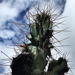 watch out... (Marcilia Bevitori) Tags: marciliabevitori minasgerais beautiful beauty dangerous natureza nature brasilemimagens ngc mobgraphia iphonese aoarlivre cacto cactus