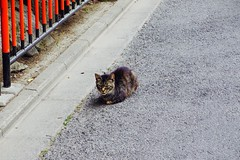 Today's Cat@2017-06-25 (masatsu) Tags: cat thebiggestgroupwithonlycats catspotting pentax mx1