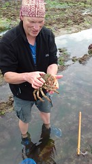 Rockpooling at Oxwich (Thomas Guest) Tags: spider crab edible pipefish hermit