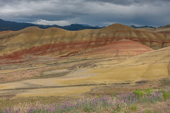 Central Oregon June 2017 (27 of 38) (Joyce Pinsker) Tags: johndayfossilbedsnationalmonument oregon paintedhills wildflowers