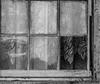 Old Homestead (egbphoto) Tags: abandoned urbex urbanexplore plantation pentax pentaxk1 pentaxart justpentax