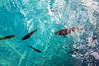 Plitvička jezera fish