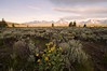 Tetons at Sunrise from Willow Flats (mleese) Tags: grandtetonnationalpark tetons sunrise willowflats grandteton mountmoran