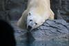 水族館15 (ののリサを信じろ) Tags: 水族館 白熊 カエル 蛙 シロクマ なまはげ 獅子舞 神社 桜 鯉のぼり アシカ