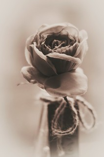 B&W portrait of a rose. Still playing with post edit and alot of improvment needed
