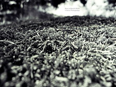 Moss in Black & White (BorisJ Photography) Tags: 2017 black blackwhite borisjusseit borisjphotography closeup durmersheim flower forest lumix lx3 macro natur nature panasonic summer sun sw white badenwürttemberg germany de