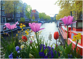 Flowers over the Canal, Amsterdam