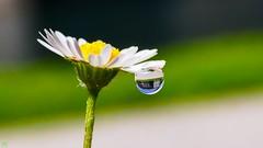 Castle in a drop - 3255 (YᗩSᗰIᘉᗴ HᗴᘉS +6 500 000 thx❀) Tags: drop castle water macro 7dwf hensyasmine droplet flower daisy