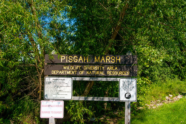 Pisgah Marsh Area - July 5, 2017