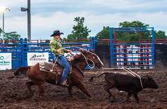 DSC_3734-Edit (alan.forshee) Tags: rodeo horse cow ride fall buck spin twirl bull stallion boy girl barrel rope lariat mud dirt hat sombrero