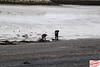 IMG_1436E (Joanne 1967) Tags: joanneshaw simplyphotography water seacoal seacoalers sand