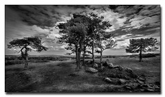 The Trees (jeremy willcocks) Tags: dartmoor devon uk blackandwhite mono landscape bucklandcommon trees sky clouds moor jeremywillcocks wwwsouthwestscenesmeuk fujixpro2 xf1024mm