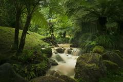 Thermal Stream (Chris Bainbridge1) Tags: terra nostra gardens san miguel azores
