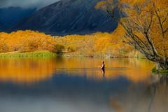 Fisherman in Lake McGregor (Jos Buurmans) Tags: autumn canterbury fishing lakemcgregor landscape mackenzie nature newzealand southisland sportsandleisure tekapo nz