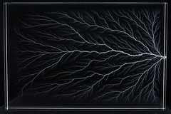 Lichtenberg Figure (Paul's Lab) Tags: lichtenberg electricity fractal physics resin science synthetic dendrite dendritic dendrites fractals lightning thunder patern structure