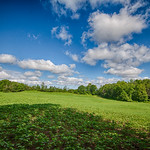 Beans, Trees, Sky, and Clouds thumbnail