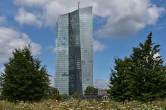 2017 Hafenpark mit EZB (mercatormovens) Tags: frankfurt city hafenpark wiese ezb hochhaus europäischezentralbank bäume nikon ostend wolkenkratzer architektur