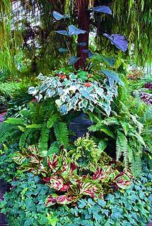 Toronto Ontario ~ Canada ~ Allan Gardens ~ Landmark Site ~ Historical Allan Gardens Conservatory ~