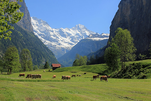 Lauterbrunnen valley in spring