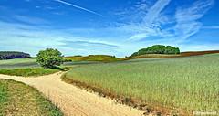 Wandern (garzer06) Tags: deutschland wolken blau himmel grün landschaftsbild groszicker baum mönchgut sand weg wandern landschaftsfoto naturephoto vorpommernrügen naturephotography naturfoto inselrügen mecklenburgvorpommern insel vorpommern rügen naturfotografie landscape landscapephotography landschaftsfotografie