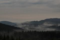 Mountainside after the rain, at dusk (karsten-the-coleoid) Tags: berge wälder bäume dämmerung abenddämmerung dusk regen nebel mist winterberg