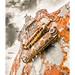 Photos expo Ligne 2017 thème rouille (gimenobruno) Tags: