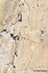 DSC_5416 (steph_abegg) Tags: 2017 california notmyphotos steph
