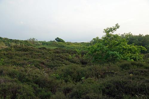2017-06-02 06-18 Niedersachsen 104 Wangerooge