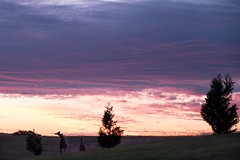 Kangaroo (Nesho83) Tags: sunrise sun xt2 amazing wow colours playful play cold winter fujifilm fuji clouds cloud sky golfcourse saturday dawn morning kangaroo roo roos