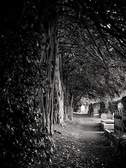 Evening Shade (GLKPhotos) Tags: graveyard trees leaves path headstones overgrown foliage peaceful shaded evening pathway belfast countyantrim ulster northernireland blackandwhite monochrome old churchyard silence solitude