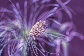 frilly grass macro HSS