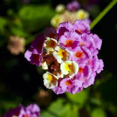 Petites flors acabades de regar