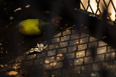 Shadow on the forgotten cage (Amr Tawwab) Tags: tawwab photography photo mylens mywork mine egypt eg cairo breath food green eaten breakfast cage shadow morning sunshine sunrise sunny inside closeup close focus focused shade forget forgotten merci