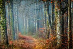 Forest mood! (pat.thom974) Tags: trees fog forest wood mood leaves red green
