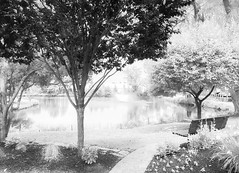 ODC - The Common Ground (lclower19) Tags: iphone odc commonground 26techniques infrared park woburn massachusetts landscape pond fountain bench 52in2017 week26 lr ir