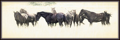 Lazy Day in the  Pasture (Brian 104) Tags: horses sketch blend topaz
