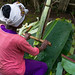 A Dorze woman prepares unleavened bread made from the false banana tree, Gamo Gofa Zone, Gamole, Ethiopia