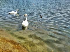Kensington Gardens (brimidooley) Tags: swans pond kensington uk england britain gb greatbritain citybreak city travel europe london unitedkingdom londra londres ロンドン 런던