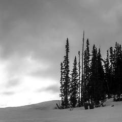 Trees On Beaver Creek (Mabry Campbell) Tags: 2014 beavercreek co colorado houstonphotographer january mabrycampbell us usa unitedstates unitedstatesofamerica blackandwhite fineartphotography image landscape mountain mountains photo photograph photography rockymountains snow squarecrop trees winter f13 january272014 20140127img4035 12495mm ¹⁄₂₅₀sec 80 59179mm fav10 fav20 fav30
