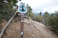 DSC_0315 (Six Sigma Man (2.700.000 views)) Tags: bigbear california bigbearlake cougarcresttrail nikon nikond3200